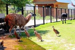 Ostrich Ranch