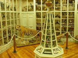 Museo civico di storia naturale Craveri