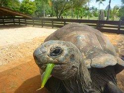 Feeding the tortoise