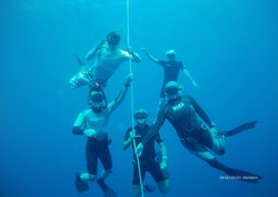 Fish and Ships Freediving and Scuba