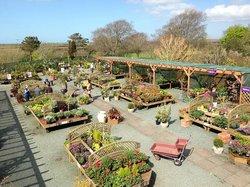 St Ishmaels Garden Centre