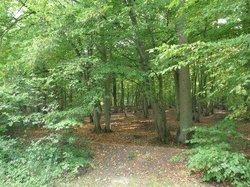 Forêt de Rihoult-Clairmarais