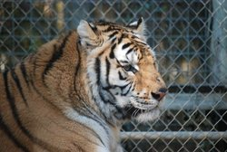 Endangered Animal Rescue Sanctuary