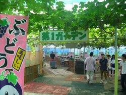 Misaka Farm Grape House