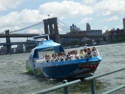 Shark Speedboat Ride
