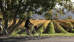 Bike Hire Marlborough