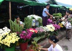 Myoma Market