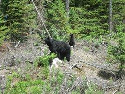 Marl Creek Provincial Park