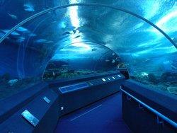 Koh Kham Undersea