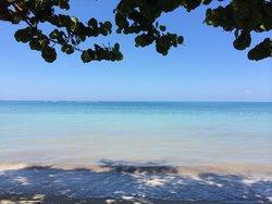Mangroves meet the water