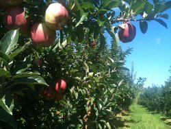 Country Apple Orchard Farm Inc