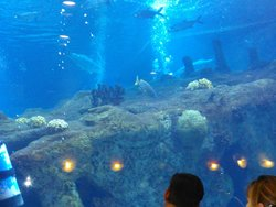 Shark Reef Cafe