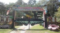 Mt. Trusmadi Apin-apin