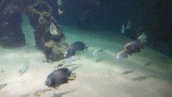 Wilhelmshaven Aquarium