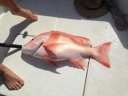 Barra 2 Billfish Fishing Charters
