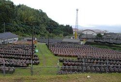 Sakamoto no Kurozu Tsubobatake