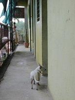 Hospedaje Sangui