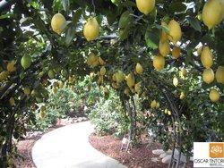 Hesperidarium - Il Giardino degli Agrumi