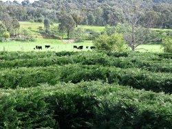 Brookfield Maze
