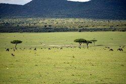 Safari Kenya Watamu - Day Tours