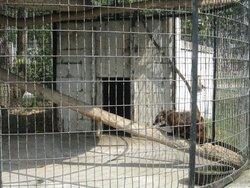 Wilson's Wild Animal Park