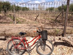 Mr. Hugo Wineries and Bikes