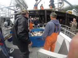 Island Seafoods Alaska