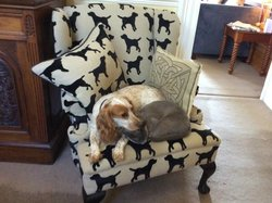 Polo and the house cat relaxing in reception