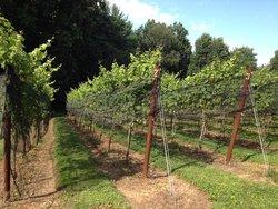 Serpent Ridge Vineyard