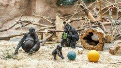 프라하 동물원