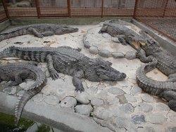 Atagawa Tropical & Alligator Garden