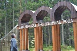 Lindulovskaya Grove