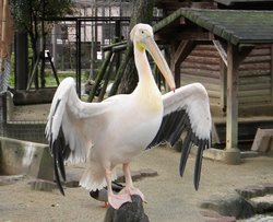 Kurume Bird Center