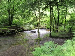 Cardinham Woods (Forestry England)