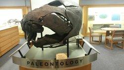 Paleontology Museum