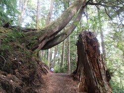 Crestline Park Woodland Trail