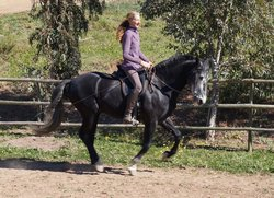 Live and Breathe Horses - Day Class