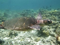 Blue Lagoon Trip - Swimming with a Sea Turtle (amazing!)