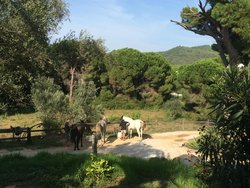 Skiathos Riding Centre