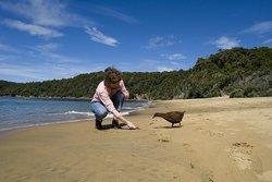 Stewart Island Experience