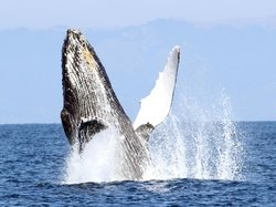 Oceanic Society Farallon Islands Whale Watching