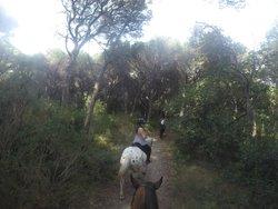 Cavallo Natura