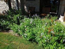 Plants that attract Monarch butterflies