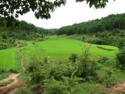 Ko Min - Kalaw Trekking Guide