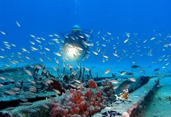 St-Barth Plongee - Birdy Dive Center
