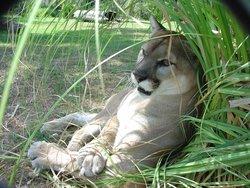 Hardee County Wildlife Refuge