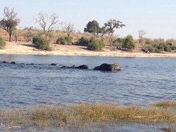 Ngina Safaris