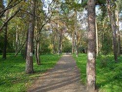 Park Green Grove