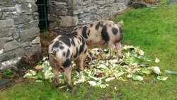 Wallenrigg Farm B&B