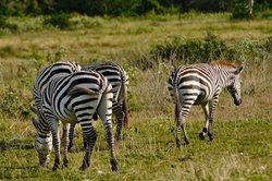 Calauit Wildlife Sanctuary